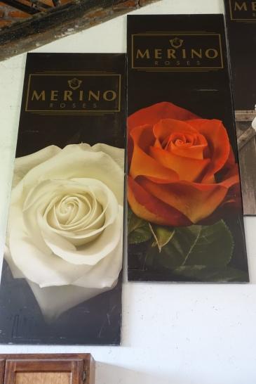 Merino Roses